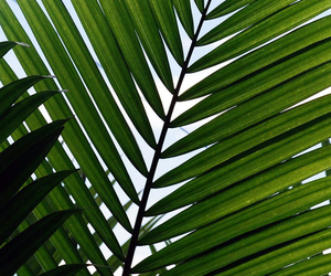 palm tree and summer image