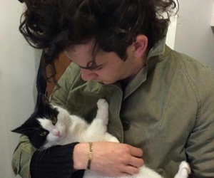 the 1975, matty healy, and cat image
