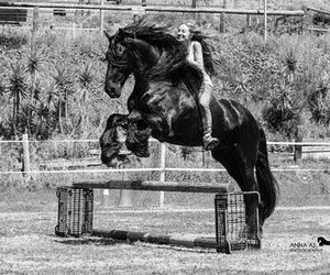 happy, horse, and jump image