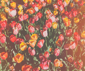 flowers, nature photography, and colorful flowers image