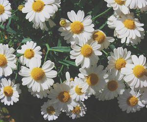 canon, vsco, and flower image