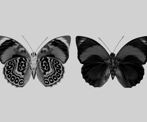 b&w, butterfly, and change image