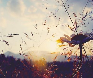 daisies, photography, and sunset image