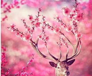pink, flowers, and deer image