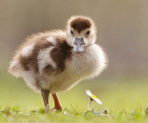 baby animals, birds, and cute animals image