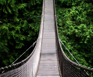bridge and forest image
