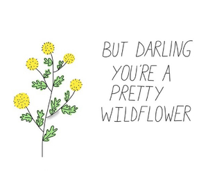 flowers, header, and quotes image