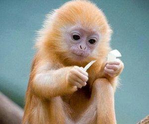 monkey, animal, and cute animals image