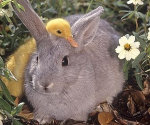 animals and pastel image