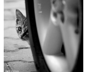 animal, wheel, and car image
