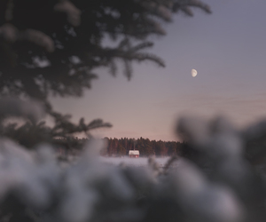moon, snow, and forest image
