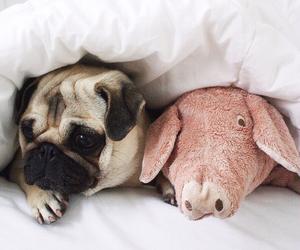 animal, dog, and pig image