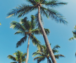 palms, summer, and tropical image
