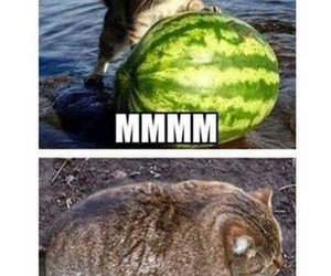 cat, yummy, and funny image
