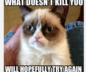 cat, grumpy, and funny image