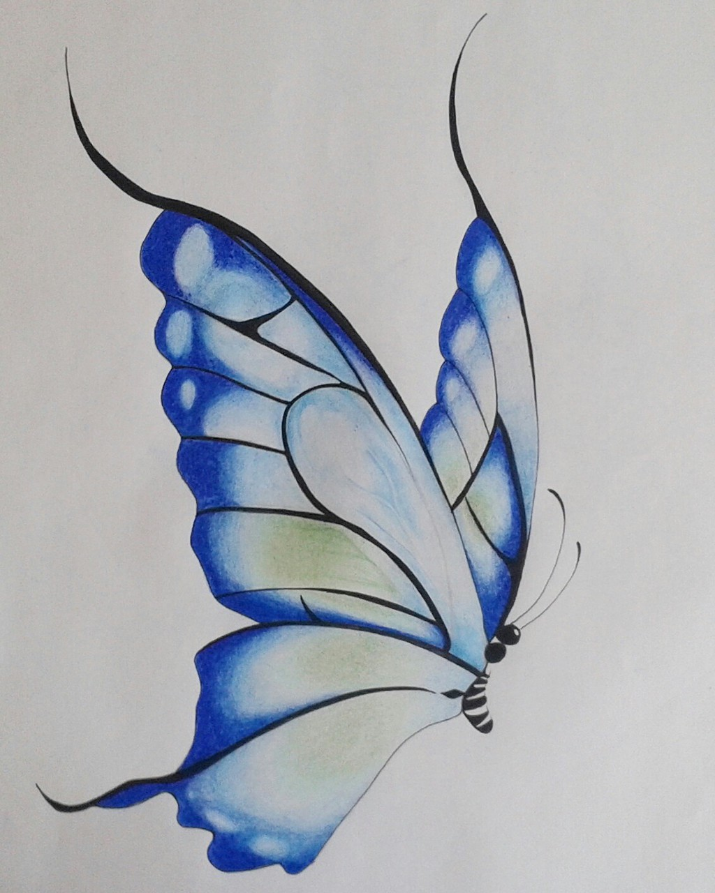 Awesome How To Color A Butterfly Pictures Inspiration - Entry Level ...
