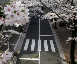 flowers, street, and japan image