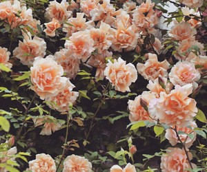 fiori, flowers, and nature image