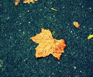 autumn, street, and down image