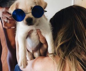 dog, photo, and swag image
