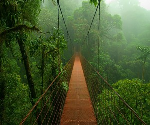 bridge, green, and forest image