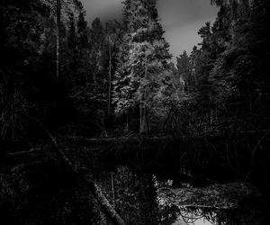 forest, amazing, and black and white image