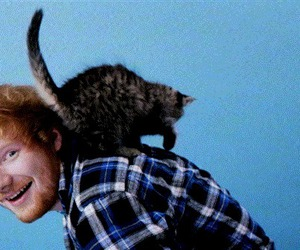 ed sheeran, cat, and gif image