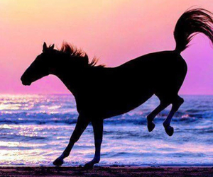beach, horse, and horse painting image