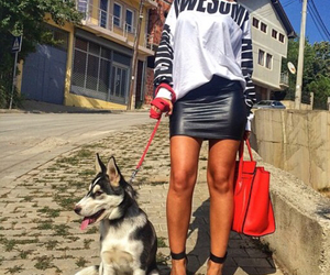 dog, fashion, and celine bag image