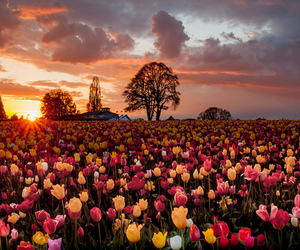 flowers and landscape image