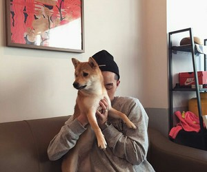korean, zion.t, and dog image