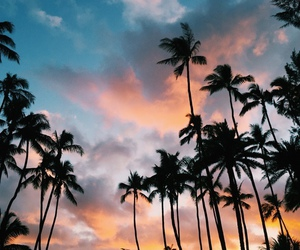 palm trees, palms, and sky image