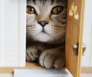 cat, cute, and door image