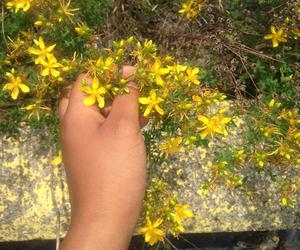 bambi, daffodils, and flowers image