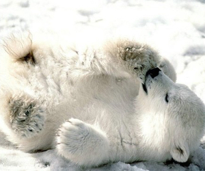 cute, bear, and Polar Bear image