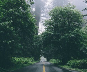 nature, road, and forest image