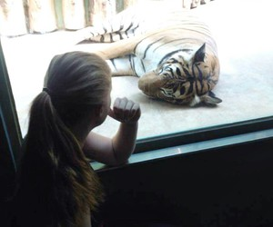 cat, sweet, and tiger image
