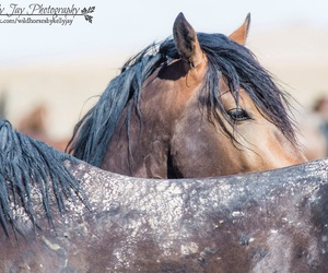 Image by unbridled