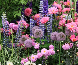flowers, nature, and garden image