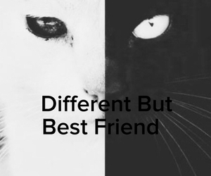 best friends, black&white, and cool image