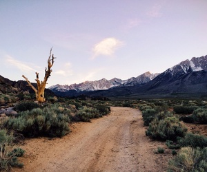 indie, nature, and travel image