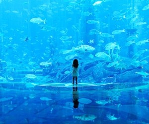 fish, aquarium, and blue image