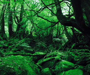 beautiful, forest, and ghibli image