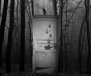 door, dark, and forest image