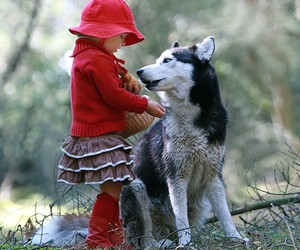 wolf, red, and dog image