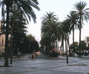 background, palms, and paradise image