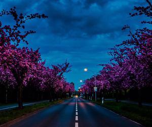 night, road, and tree image
