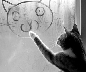 cat, animal, and window image
