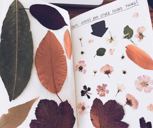 books, flowers, and leaves image