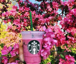 starbucks, flowers, and pink image